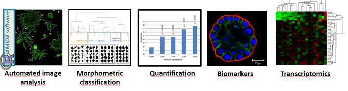 image-analysis-and-bioinformatics2